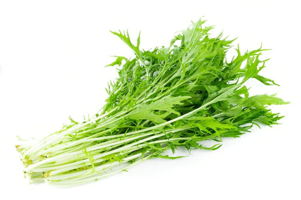 みずな,水菜,京菜の値段 価格の相場と旬や栄養成分
