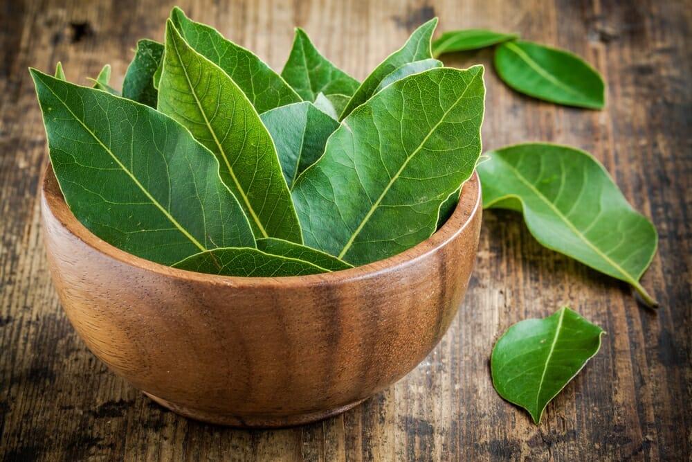 ベイリーブス,ローリエ,月桂樹の値段 価格の相場と旬や栄養成分