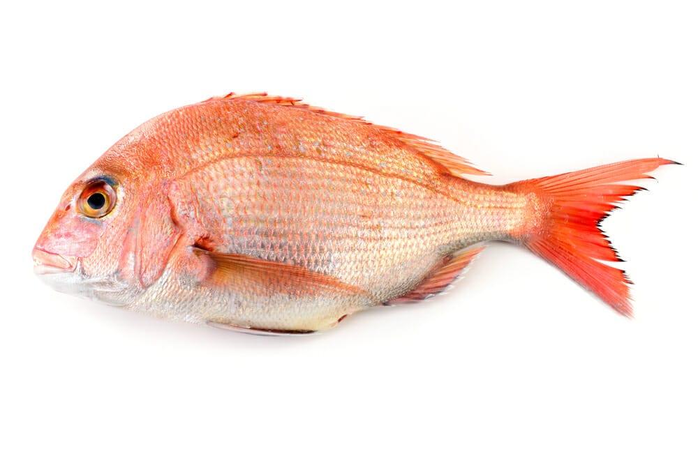 たい,タイ,鯛の値段 価格の相場と旬や栄養成分