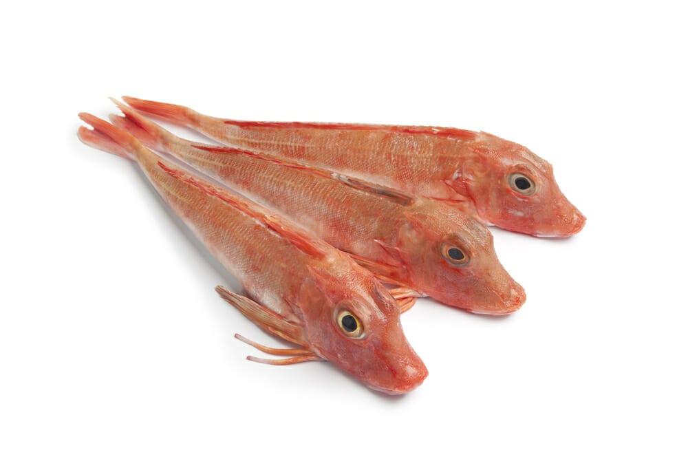 ほうぼう,ホウボウ,竹麦魚