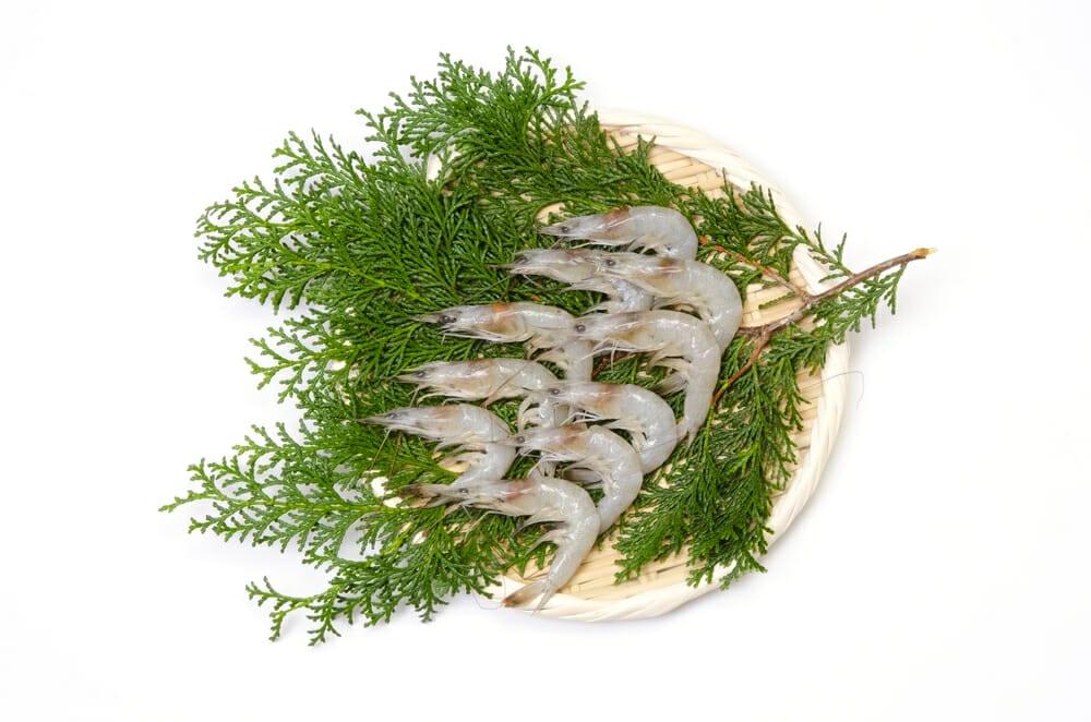 しばえび,シバエビ,芝蝦の値段 価格の相場と旬や栄養成分