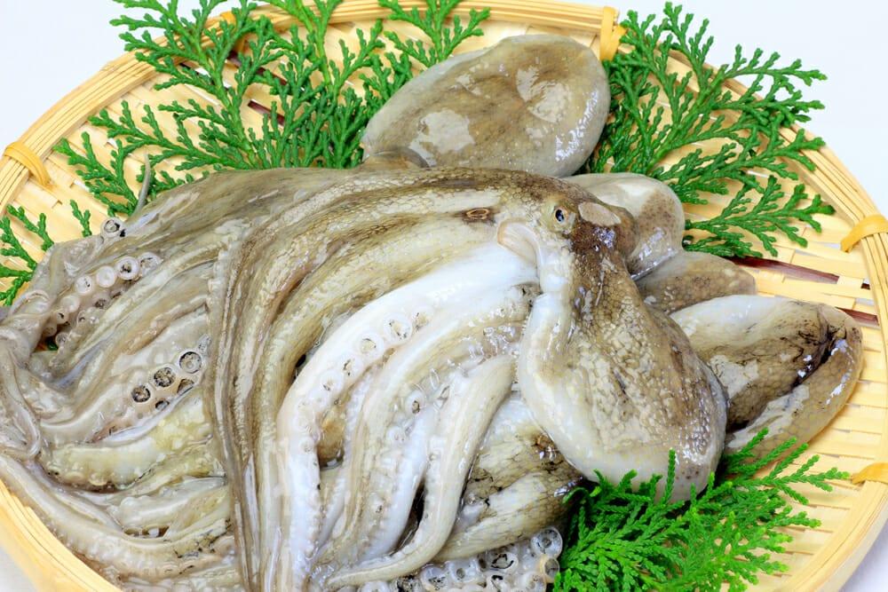 たこ,タコ,蛸の値段 価格の相場と旬や栄養成分