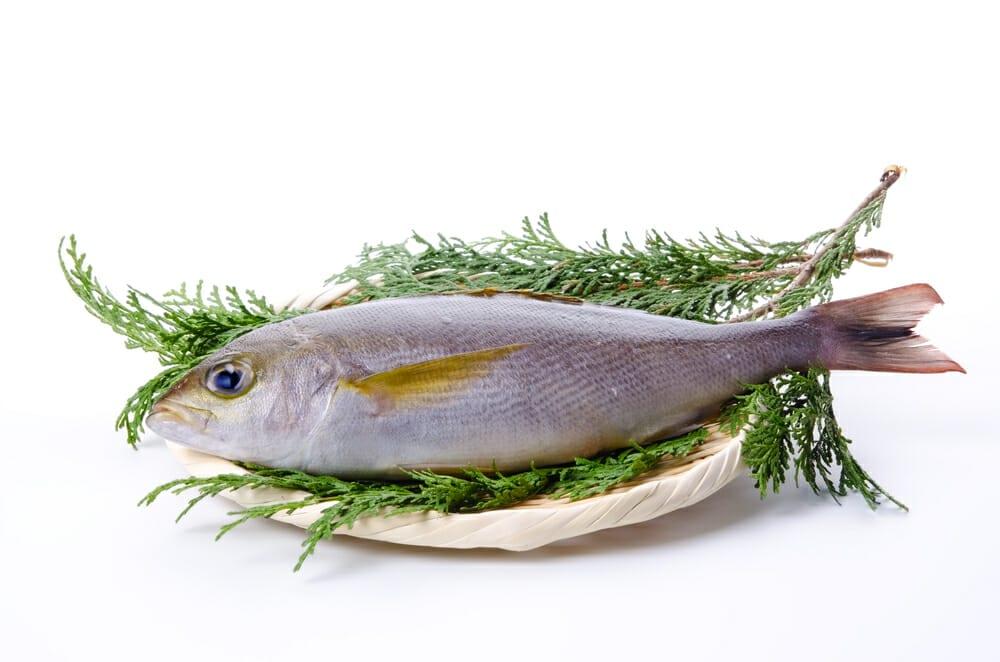 いさき,イサキ,伊佐木の値段 価格の相場と旬や栄養成分