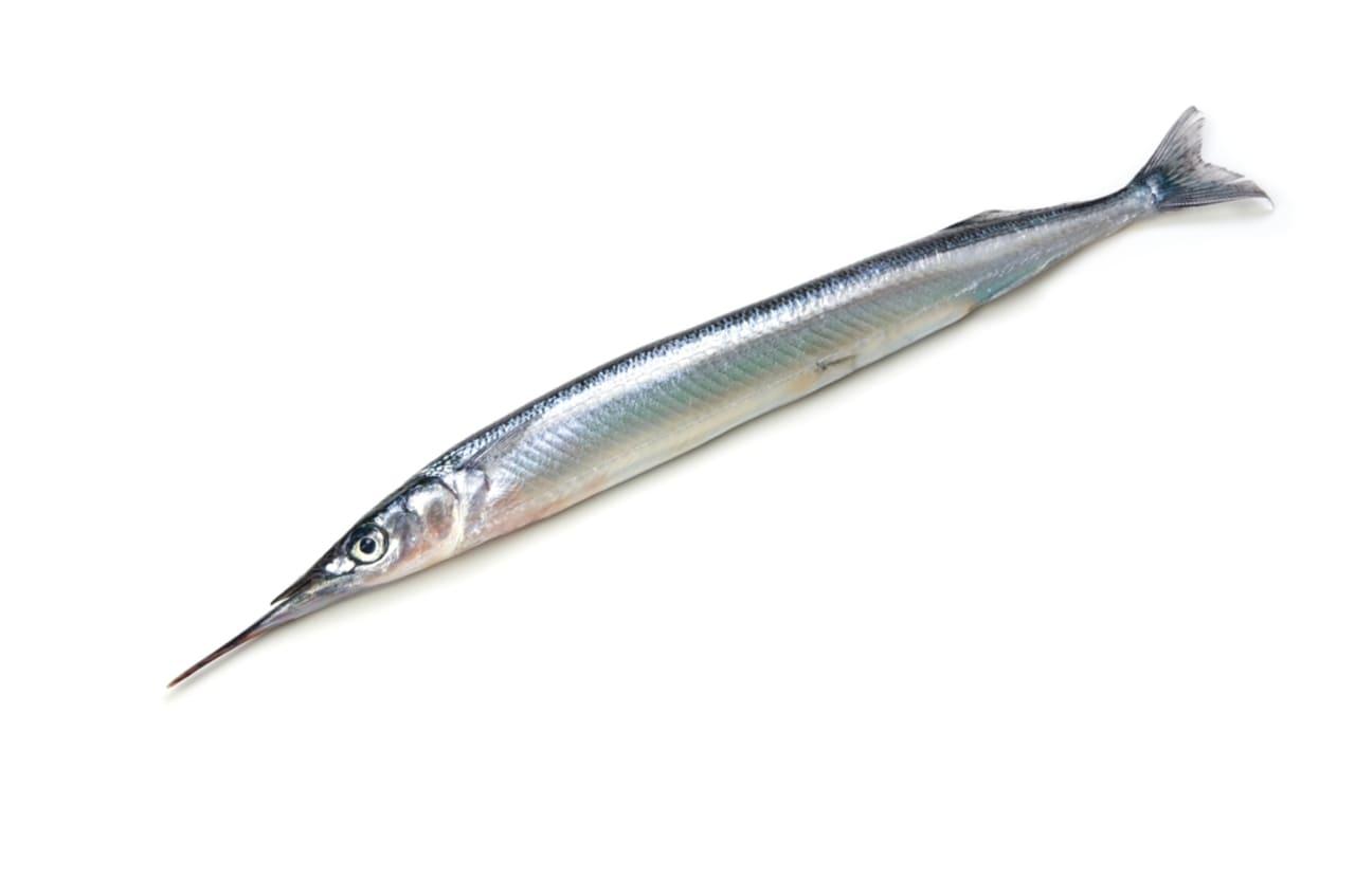 さより,サヨリ,細魚